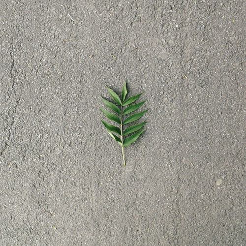 Beauty In Nature Botany Concrete Day Fragility Freshness Green Color Growth High Angle View Leaf Nature No People Outdoors Plant Plant Life