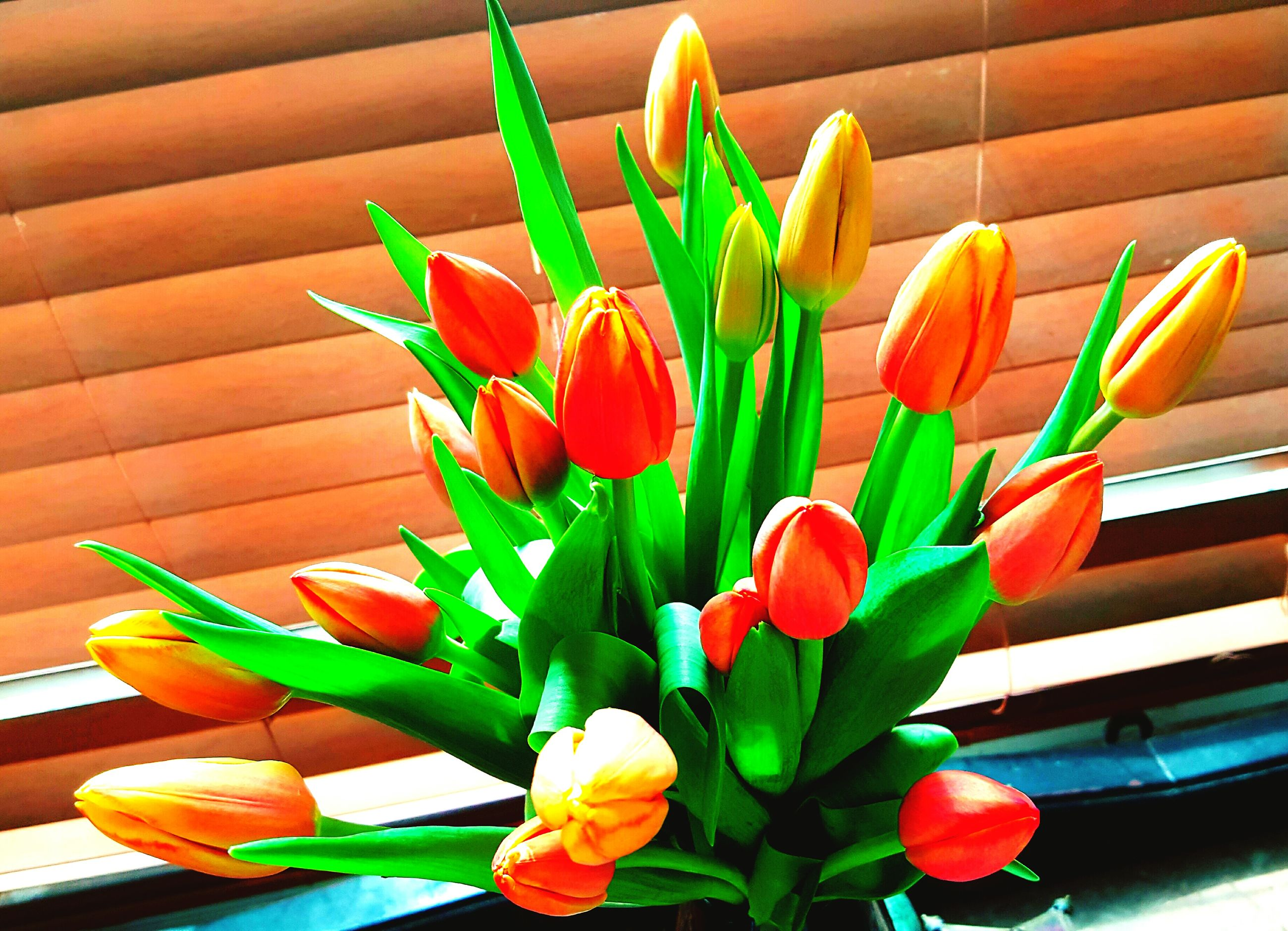 flower, freshness, petal, yellow, fragility, indoors, potted plant, flower head, plant, vase, leaf, growth, flower pot, multi colored, tulip, table, close-up, flower arrangement, stem, wall - building feature