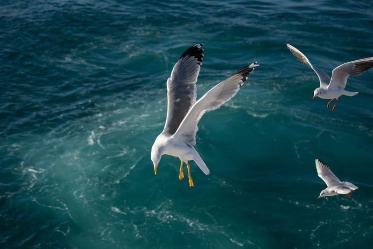 High angle view of seagulls flying over sea