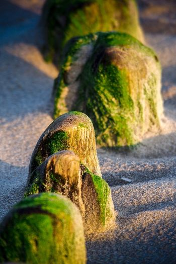 Selective Focus Close-up Moss Tree Trunk Green Color Green Nature Focus On Foreground Day Driftwood Weathered Surface Level Branch Tranquility Extreme Close Up Beauty In Nature Differential Focus Growing Scenics Pic Of The Day The EyeEm Collection EyeEm Gallery EyeEmBestPics Tranquil Scene Tranquility