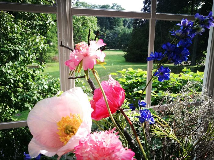 """""""...."""" Flower Pink Color Window Day No People Fragility Plant Growth Indoors  Flower Head Nature Beauty In Nature Tree Freshness Close-up Greenhouse"""