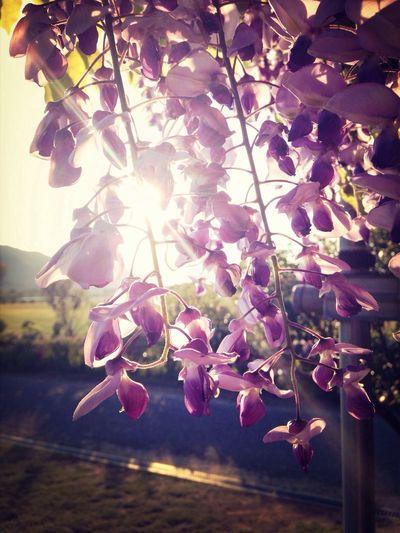 おはようございます^_^♪ Good Morning Streamzoofamily Sky Beautiful