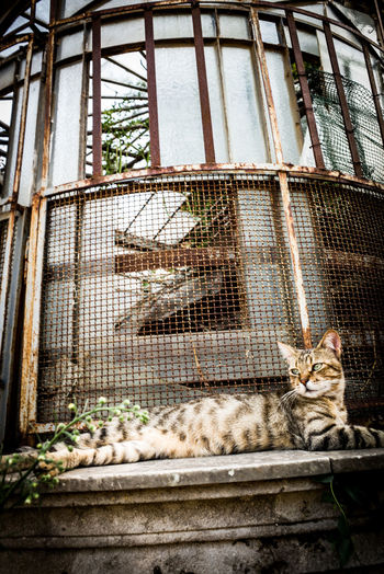 Low angle view of cat in cage