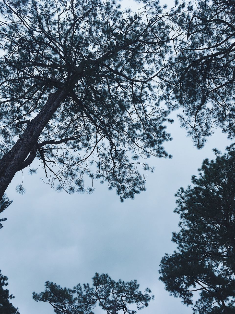 tree, plant, beauty in nature, sky, low angle view, tranquility, branch, growth, no people, nature, day, tranquil scene, scenics - nature, outdoors, cloud - sky, winter, cold temperature, forest, non-urban scene, directly below, tree canopy