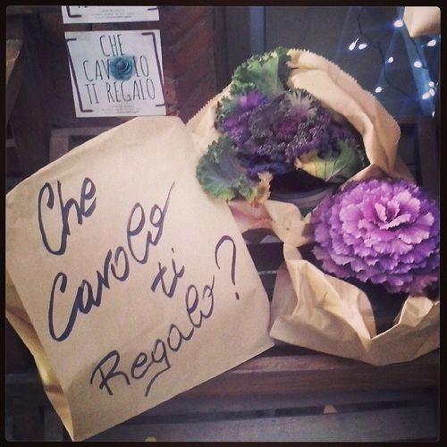 Che Cavolo ti regalo? Cabbage Purple Viola