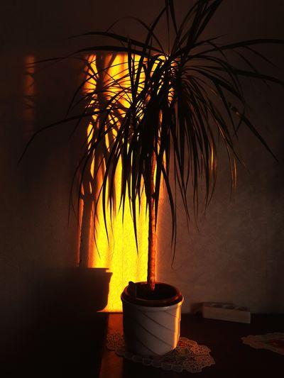 Shadow Flower Shadow EyeEm Selects Tree Halloween Sky Blooming Flower Head Stamen Palm Tree Growing In Bloom Date Palm Tree Hibiscus Plant Life Dahlia Palm Frond Pollen Pink Sunflower Single Flower Palm Leaf Osteospermum Rosé Petal