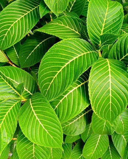leaf Leaf