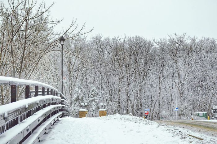 Winter Snow Cold Temperature Bare Tree Tree Nature Weather Day No People Outdoors Beauty In Nature Sky Snowing Popular Photos Eye4photography  Weather Wintertime Montreal Canada WhiteCollection Frozen Nature EyeEm Best Edits Snow ❄ Bridge City