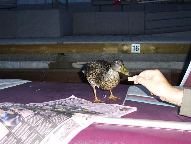 Duck Sundeck Visit