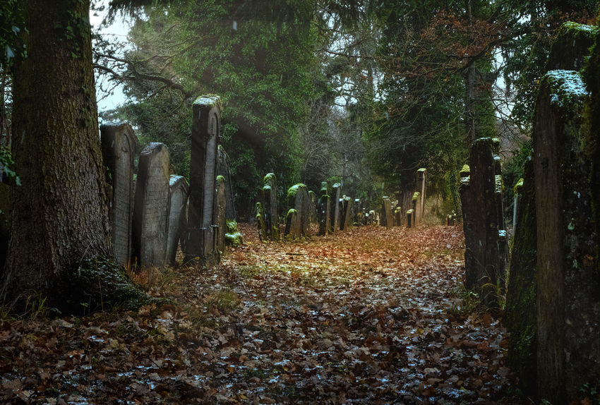 Jewish Cemetery Grave Cemetery Day Forest Graveyard Jewish Cemetery Nature No People Outdoors Tranquility Tree