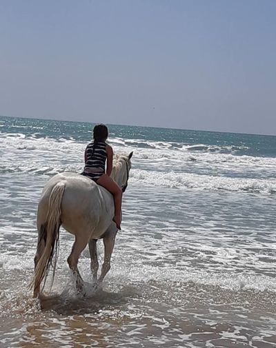 Anaura Bay, my lovely girl is growing up 😘 Happy Dadday! New Zealand Beach Road Trip Photograpghy New Zealands Summer😍 Hourse Riding Water Animal Animal Themes Sea Mammal Land Domestic Animals Horse Beach Horizon Over Water