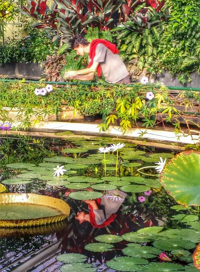 Flowers Pond Taking Photos Of People Taking Photos Water Reflections