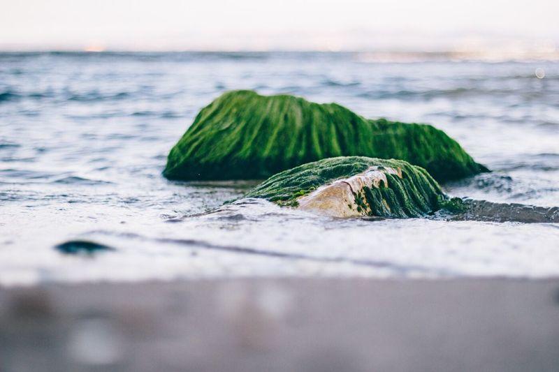 The Secret Spaces Rock Green Sand Beach Sea Bokeh Clean Pure Contrast