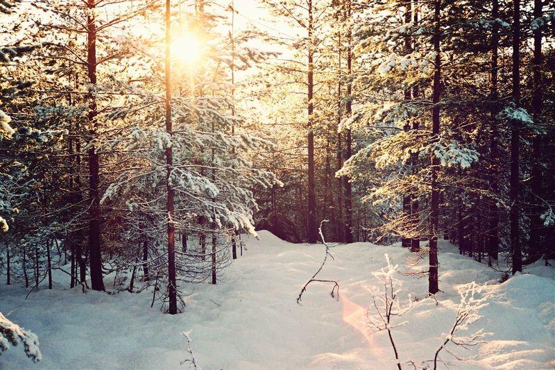 Forest Nature Snow Winter EyeEm Bestsellers Market Bestsellers September 2016 Bestsellers