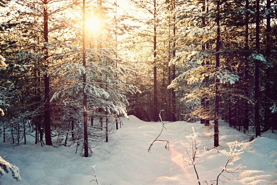 Forest Nature Snow Winter EyeEm Bestsellers Market Bestsellers September 2016 Bestsellers