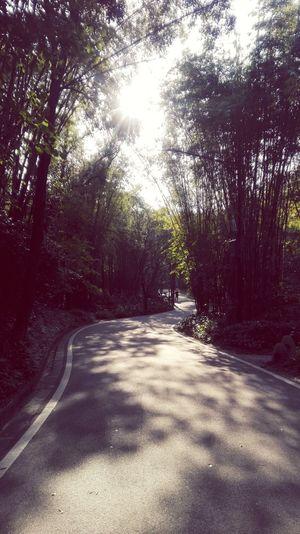 Tree Nature Sun