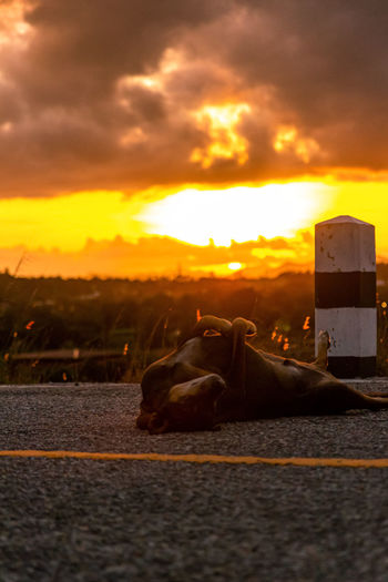 View of a dog at sunset