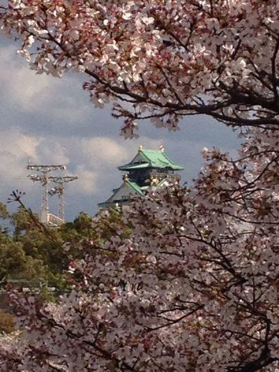 大阪城 桜 さくら