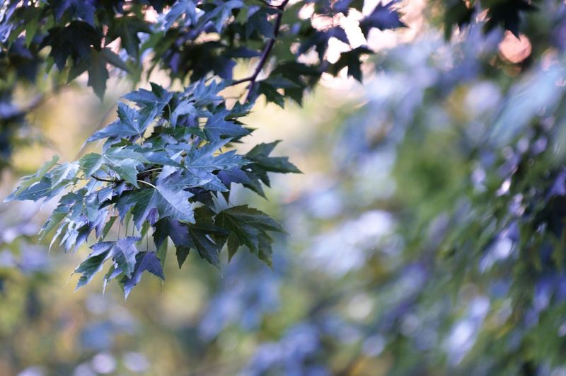 Spring foliage. Beauty In Nature Branch Close-up Focus On Foreground Freshness Growth Leaf Nature No People Outdoors Plant Selective Focus Spring Tree