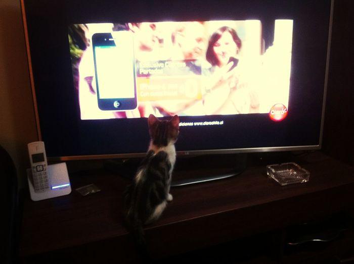 Teo viendo tele