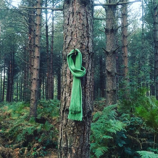 Atmospheric Beauty In Nature Forest Green Color Growth Nature Scarf Tied Tranquil Scene Tranquility Tree Tree Trunk WoodLand