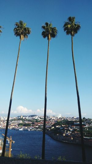 Scenic view of palm trees against sky