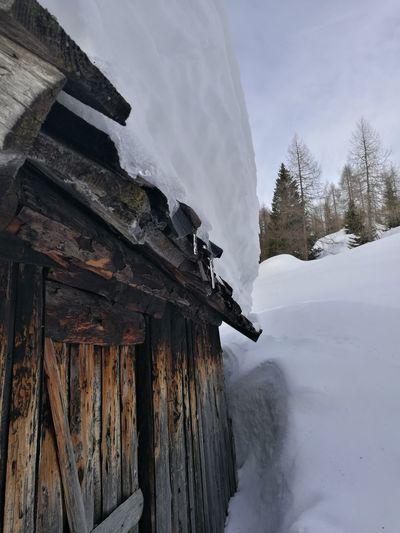 Snow Cold