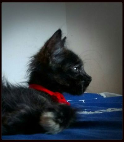 Cat Belong Anywhere Animales Friend
