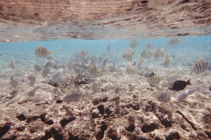Hawaii Hanaumabay Beautiful Sea Blue
