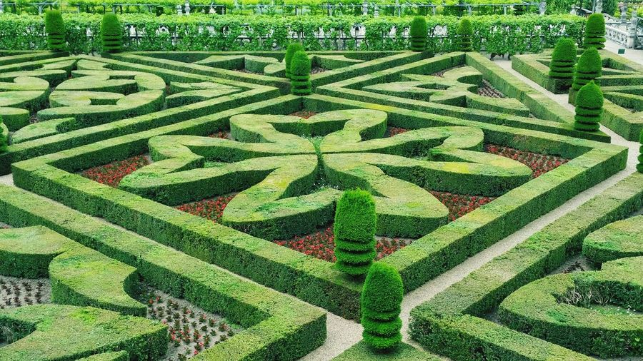 Full Frame Backgrounds Green Color Pattern No People Plant Growth Day Nature Grass Outdoors Growth Beauty In Nature Travel Destinations Villandry Gardens Vacations Villandry Grass Villandry Chateau Villandry Castle Chateau De Villandry Nature Green Color High Angle View Freshness