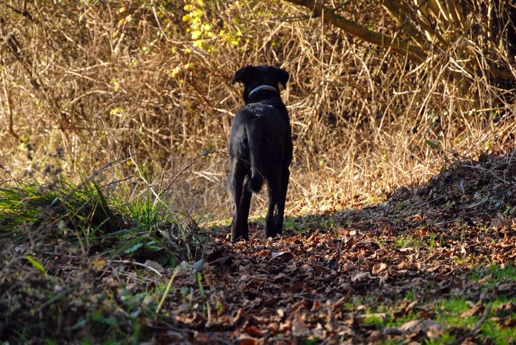 Dog Woods Walk Nature Black Winter Autumn Normandie First Eyeem Photo Standing