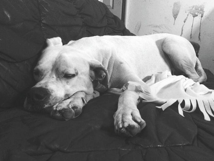 Dog Love Dog❤ Argentindog Rudi 💚 Love ♥