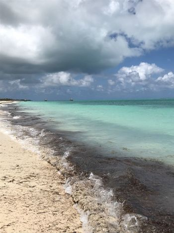 Cuban coast. Cayo Guillermo, Cuba. Cayo Guillermo, Cuba Cuba Caribbean Vacations Beach White Sand Turquoise Water Blue Sky Blue Sea Small Waves Clouds Moody Sky Seaweed Breathing Space