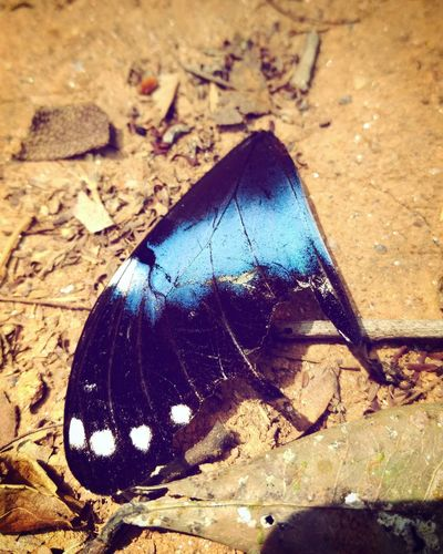 Insect Butterfly - Insect Butterfly Wings Bleu Butterfly Blue Pretty,insect Close Up. Blue Butterfly