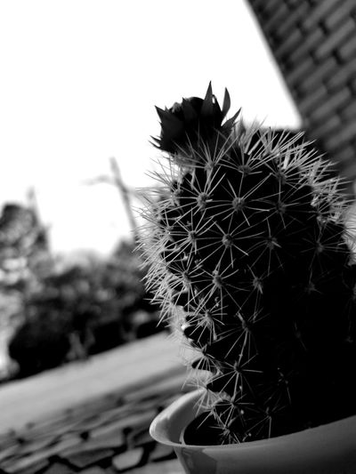 #PlatLife #blackandwhite Growth Outdoors Day Spiked No People Nature Close-up