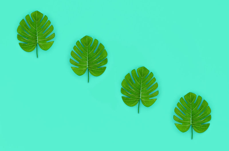 Pastel Color Background Abstract Flat Lay Top View Object Fashion Minimal Minimalism Trendy Colorful Colour Composition Hipster Decorative Idea Above Beautiful Concept Tropical Spa Exotic Palm Botanical Botany Decor Floral Hawaii Jungle Leaf Monstera Natural Nature Paper Plant Split Philodendron High Angle Blue Green Turquoise Many Pattern