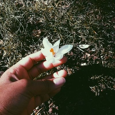 Searchingforspring Backyardfun Flower Beccakempphotos sun springgram