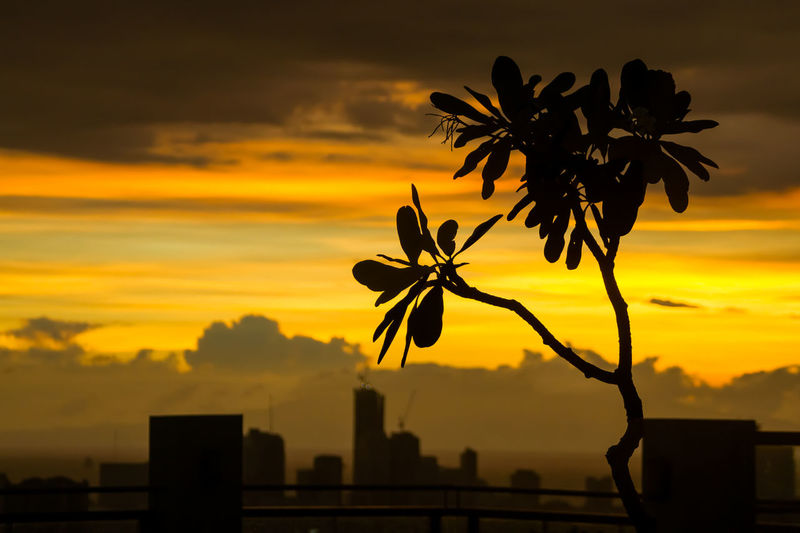 Silhouette Tree Against Orange Sky