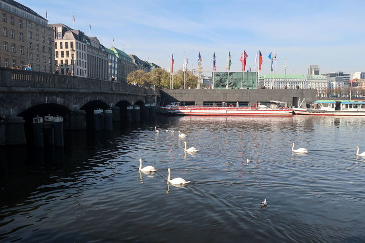 View of swans on bridge over river in city