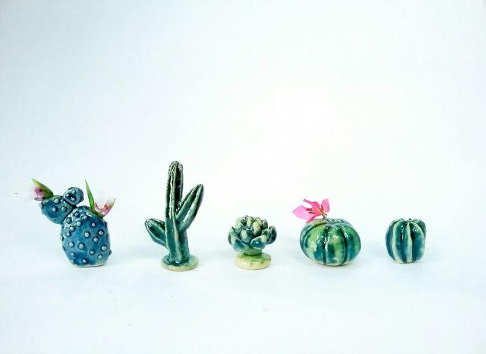 cactus Hello