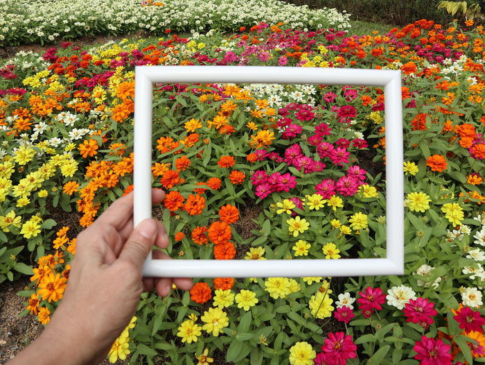 Midsection of person holding multi colored flowering plants