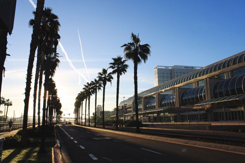 Downtown San Diego California Highway Palm Tree Road Transportation Street Architecture Outdoors Tree The Way Forward City