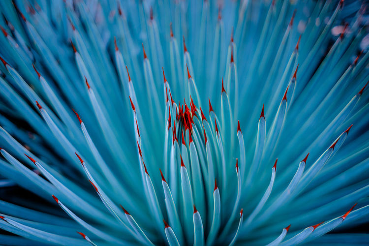 Full frame shot of a turquoise cactus