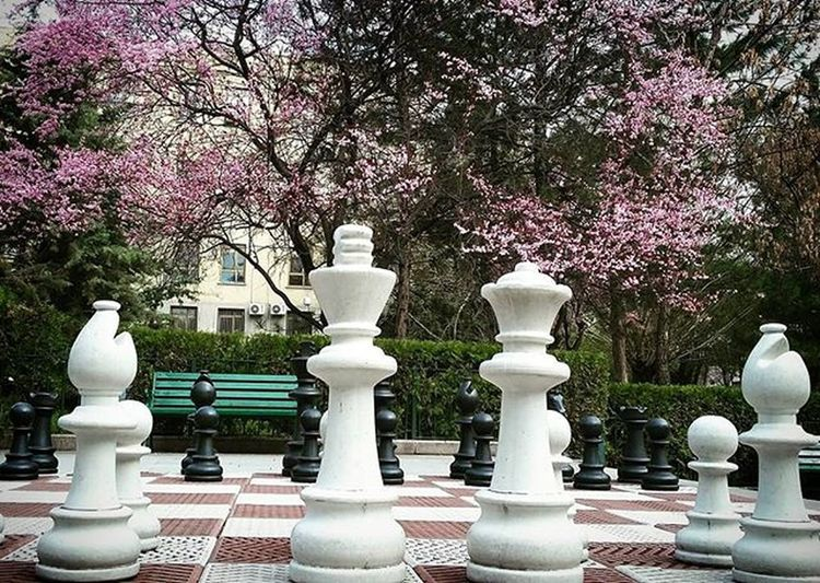 Sıhhıyekampüsü Hacettepe Satranc Chess Spring Hello World First Eyeem Photo Pink Pink Flower Black And White Black & White Black And White Collection