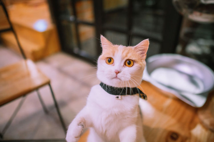 Mild cat.😻 Pets Domestic Domestic Animals Mammal Cat Domestic Cat One Animal Feline Vertebrate Focus On Foreground Portrait No People Looking At Camera Whisker Sitting Day Cats Cat Lovers Cat♡ Cats Of EyeEm Celebration Fun Funny Love Nature