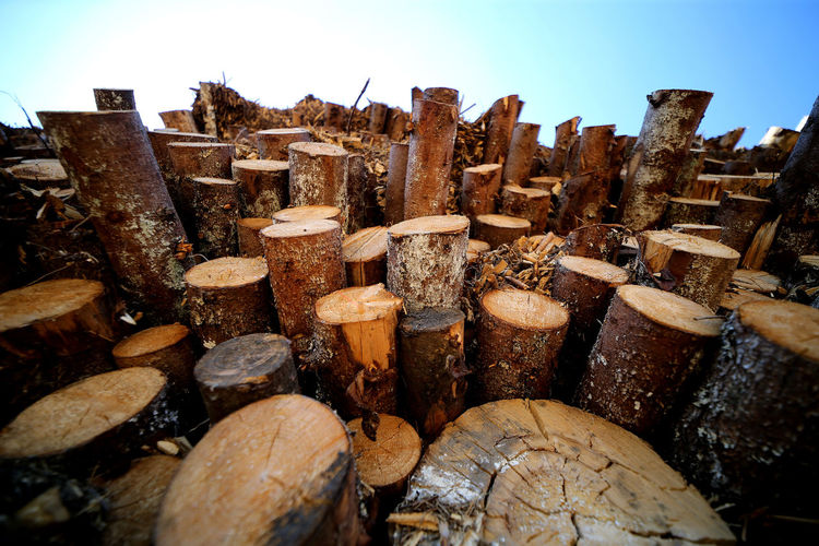 Stack of logs in forest against clear sky