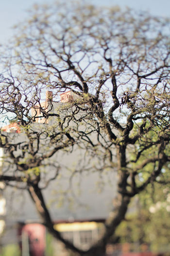 Acacia tree Acacia Branches Buenos Aires Nature Travel Tree Vacations Branch Buenosaires Close-up Day Focus On Foreground Nature Outdoors Tiltshift Travel Destinations Tree