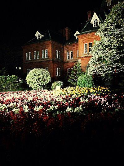 Flower Night Park
