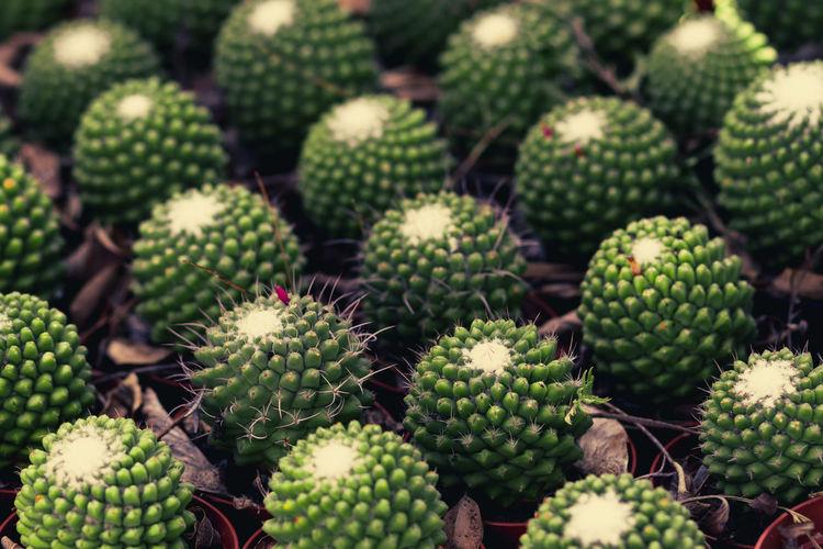 Full frame shot of succulent plants in market