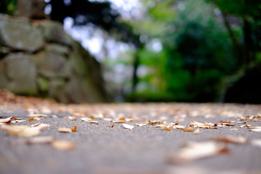 Autumn Leaves Fall Leaves Fujifilm Fujifilm X-E2 Fujifilm_xseries Leaves Low Angle View Xf35mm ローアングル 落ち葉 Road Street 公園 Park